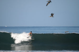 Pelicans passing above a surfer.
