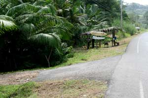 This is the entrance to the beach from them main road. There are signs, you can't miss the turnoff to Playa Hermosa.