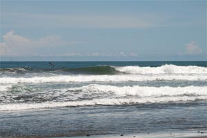 If the waves are not good in Dominical it might be worth to check out this surf spot.