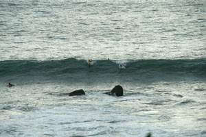 Paddling for a wave at Roca Loca.